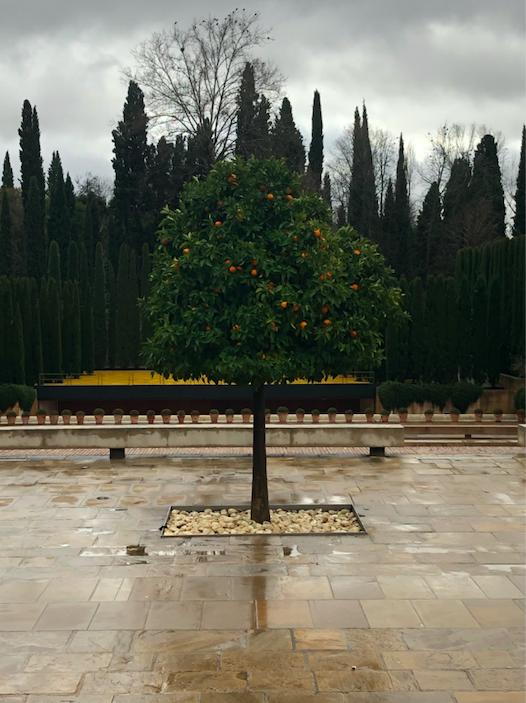 Oranger Alhambra Grenade